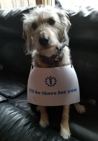 Doggie with a sign I'll be there for you